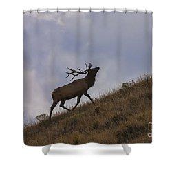 Challenge Of The Bull Elk Shower Curtain by Sandra Bronstein