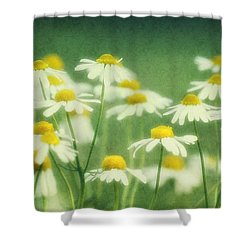 Chamomile Shower Curtain by Claudia Moeckel