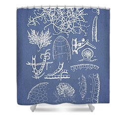Champia Parvula Shower Curtain by Aged Pixel