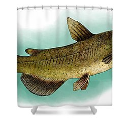 Channel Catfish Shower Curtain