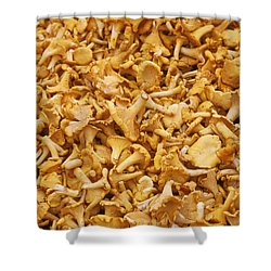 Chanterelle Mushroom Shower Curtain by Anonymous