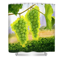 Chardonnay Grapes Shower Curtain by Mike Robles