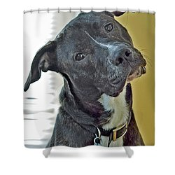 Charlie Shower Curtain by Lisa Phillips