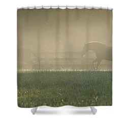Chasing A Phantom Shower Curtain