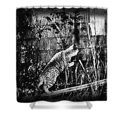 Chasing Shadows Shower Curtain by Susan Capuano
