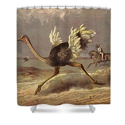 Chasing The Ostrich Shower Curtain by English School