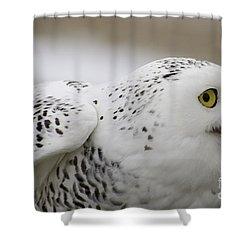 Cheeky Snow Owl Shower Curtain