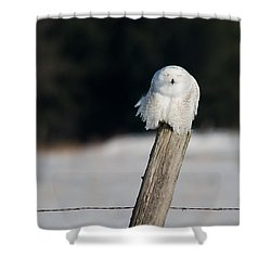 Cheeky Snowy Shower Curtain by Cheryl Baxter