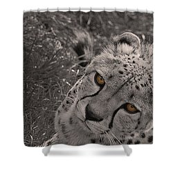 Cheetah Eyes Shower Curtain by Martin Newman