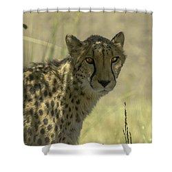 Cheetah Gaze Shower Curtain by LeeAnn McLaneGoetz McLaneGoetzStudioLLCcom
