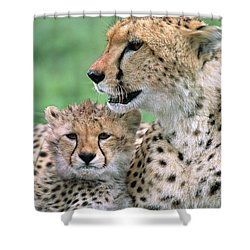 Cheetah Mother And Cub Shower Curtain by Yva Momatiuk John Eastcott