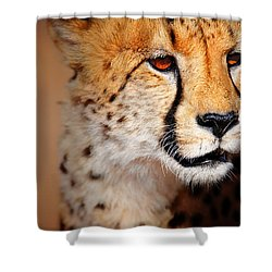Cheetah Portrait Shower Curtain by Johan Swanepoel