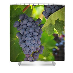Chelan Blue Grapes Shower Curtain