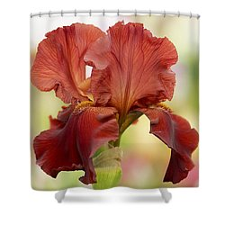 Chelsea Iris Shower Curtain by Rona Black