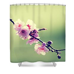 Shower Curtain featuring the photograph Cherry Blooms by Yulia Kazansky