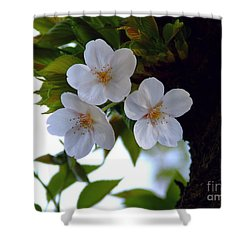 Shower Curtain featuring the photograph Cherry Blossom by Andrea Anderegg