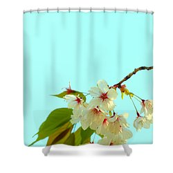 Shower Curtain featuring the photograph Cherry Blossom Flowers by Rachel Mirror
