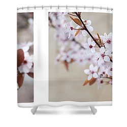 cherry blossom II Shower Curtain by Hannes Cmarits