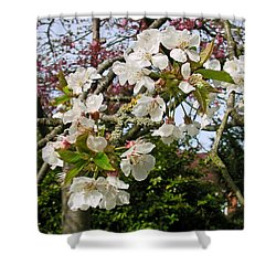 Cherry Blossom In The Spring Shower Curtain