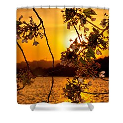 Shower Curtain featuring the photograph Cherry Blossom Sunset by Mitchell R Grosky