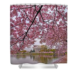 Cherry Blossom Tree Shower Curtain by Mitch Cat