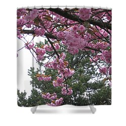 Cherry Blossoms 1 Shower Curtain