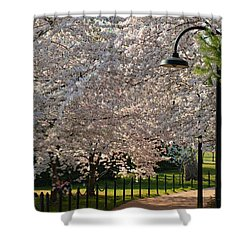 Cherry Blossoms 2013 - 060 Shower Curtain