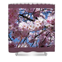 Cherry Blossom Trees Of Branch Brook Park 3 Shower Curtain