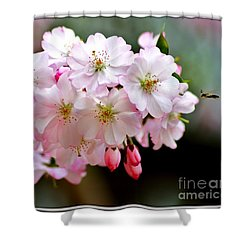 Cherry Blossoms And A Bee Shower Curtain by Patti Whitten