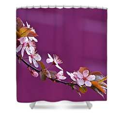 Cherry Blossoms And Plum Door Shower Curtain