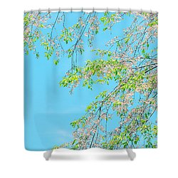 Shower Curtain featuring the photograph Cherry Blossoms Falling by Rachel Mirror