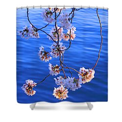 Cherry Blossoms Hanging Over Tidal Basin Shower Curtain