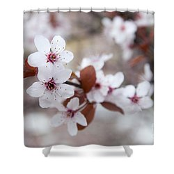 Cherry Blossoms Shower Curtain by Hannes Cmarits