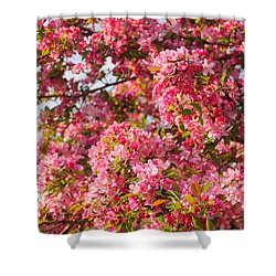 Cherry Blossoms In Washington D.c. Shower Curtain by Mitchell R Grosky