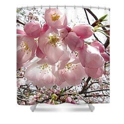 Cherry Blossoms Shower Curtain by Jennifer Wheatley Wolf