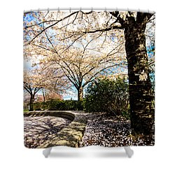 Cherry Blossoms Shower Curtain by Nancy Harrison