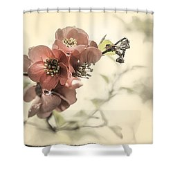 Shower Curtain featuring the photograph Cherry Blossoms by Peter v Quenter