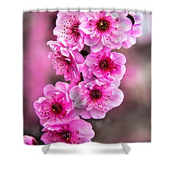 Cherry Blossoms Shower Curtain by Robert Bales