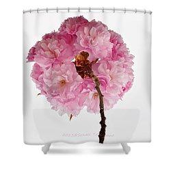 Cherry Globe Shower Curtain by Sonali Gangane