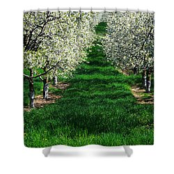 Cherry Orchard Morning Shower Curtain by Mary Lee Dereske