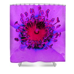 Cherry Pie Rose - Photopower 2827 Shower Curtain by Pamela Critchlow