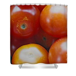Shower Curtain featuring the photograph Cherry Tomatoes by Cassandra Buckley