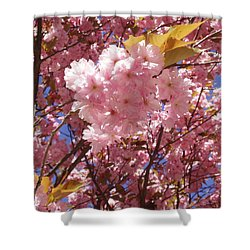 Cherry Trees Blossom Shower Curtain
