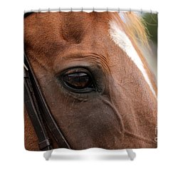 Chestnut Horse Eye Shower Curtain