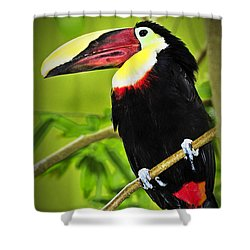 Chestnut Mandibled Toucan Shower Curtain