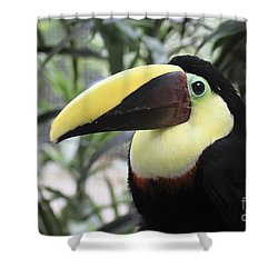 Shower Curtain featuring the photograph Chestnut-mandibled Toucan by Teresa Zieba