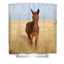 Chestnut Mule In Gold Shower Curtain