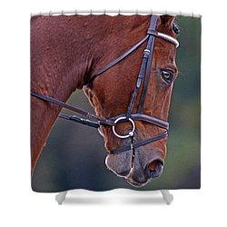 Chestnut Shower Curtain by Skip Willits