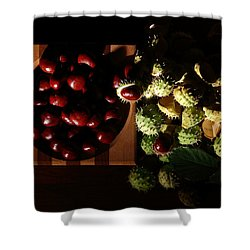 Shower Curtain featuring the photograph Chestnuts by David Andersen