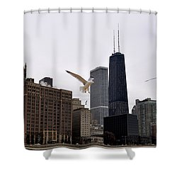 Chicago Birds 2 Shower Curtain by Verana Stark